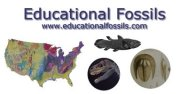 Educational Fossils