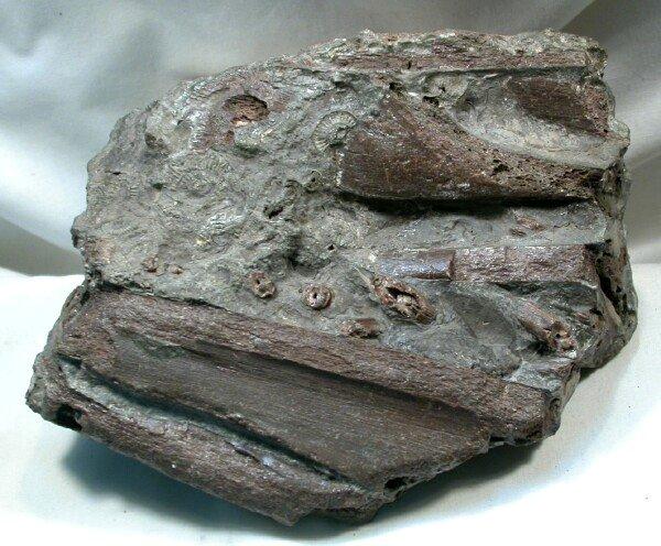 ichthyosaur fossil - photo #38