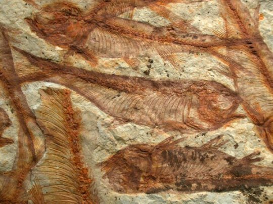 Why fossil dating is inaccurate