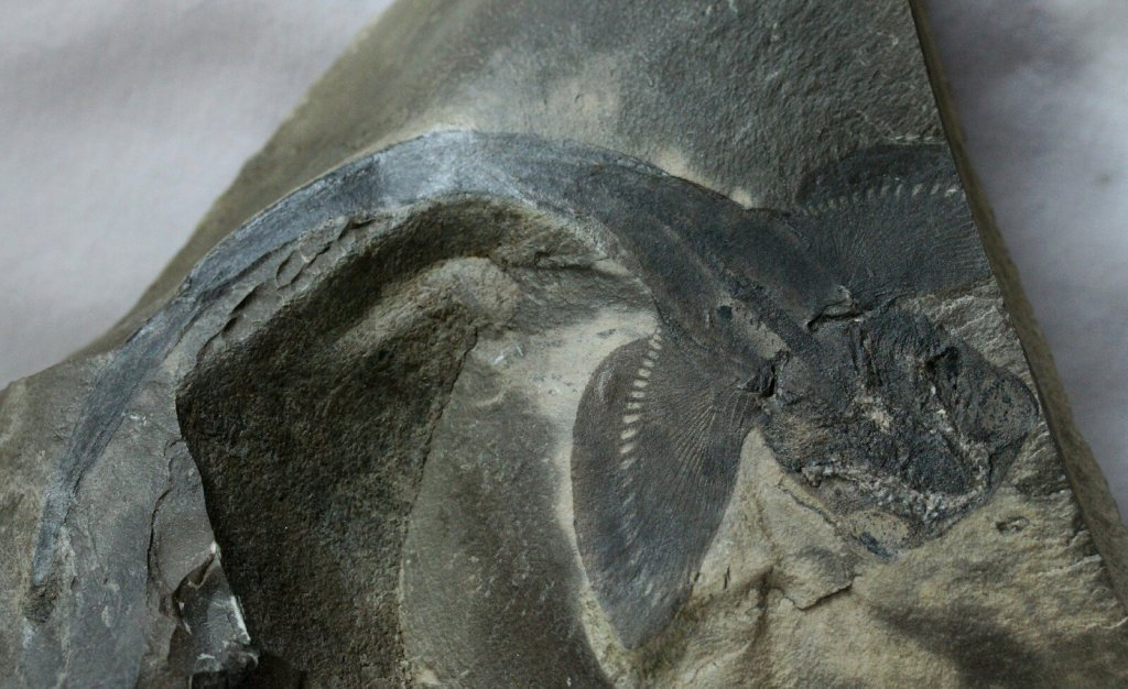 fossils of the paleozoic era The paleozoic era occurred from about 542 million years ago to 251 million years ago it was a time of great change on earth.
