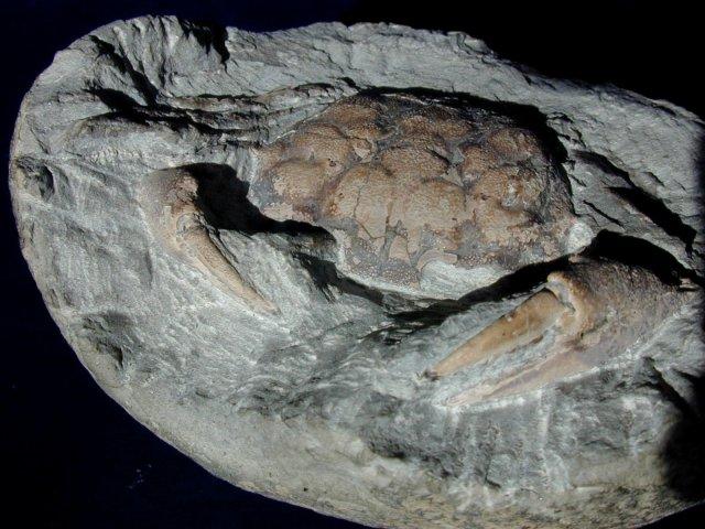 ativan oregon fossil