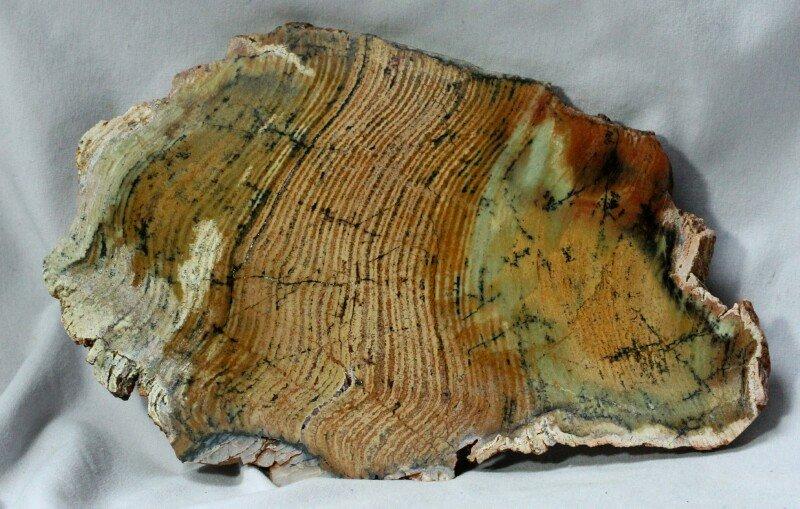 Strelley Pool Stromatolites | 800 x 509 jpeg 115kB